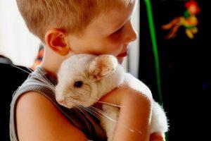 Аллергия на шиншилл: симптомы, профилактика и лечение