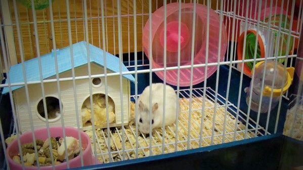 Аксессуары для крысы: что купить первым делом? Подробный чек-лист