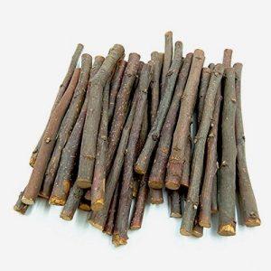 Ветки каких деревьев можно давать шиншилле?