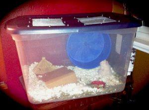 Подойдет ли аквариум и террариум для хомяков как альтернатива клетке?