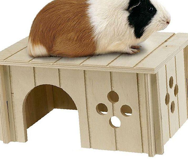 Что должно быть в клетке у морской свинки: обустраиваем жилье питомца