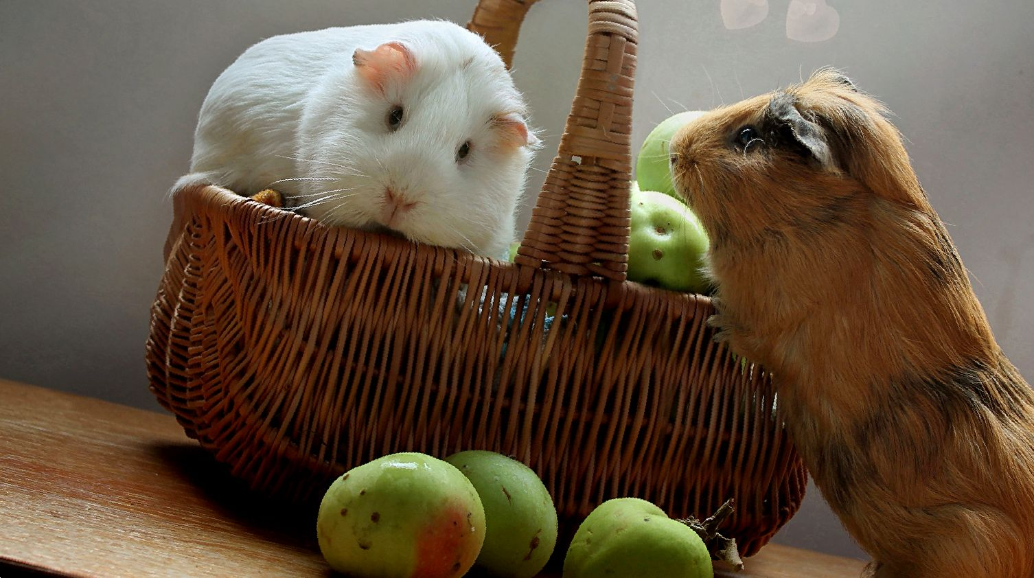 Можно ли морским свинкам яблоки и груши?