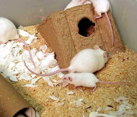Домик для крыс: как выбрать готовый или сделать своими руками