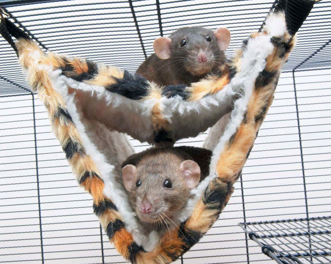 Размер клетки для крысы