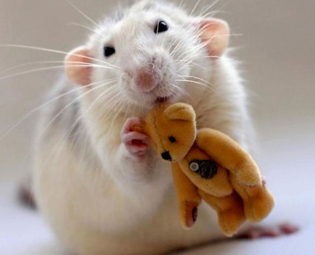 имена крысе мальчику