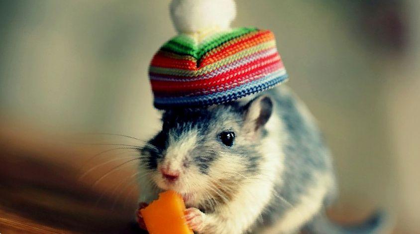 как назвать крысенка мальчика