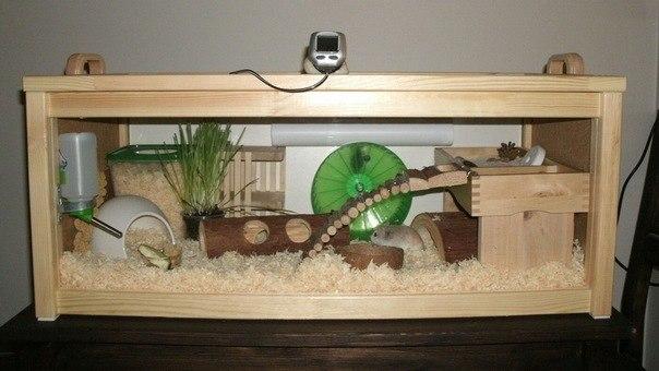Аквариум для морской свинки