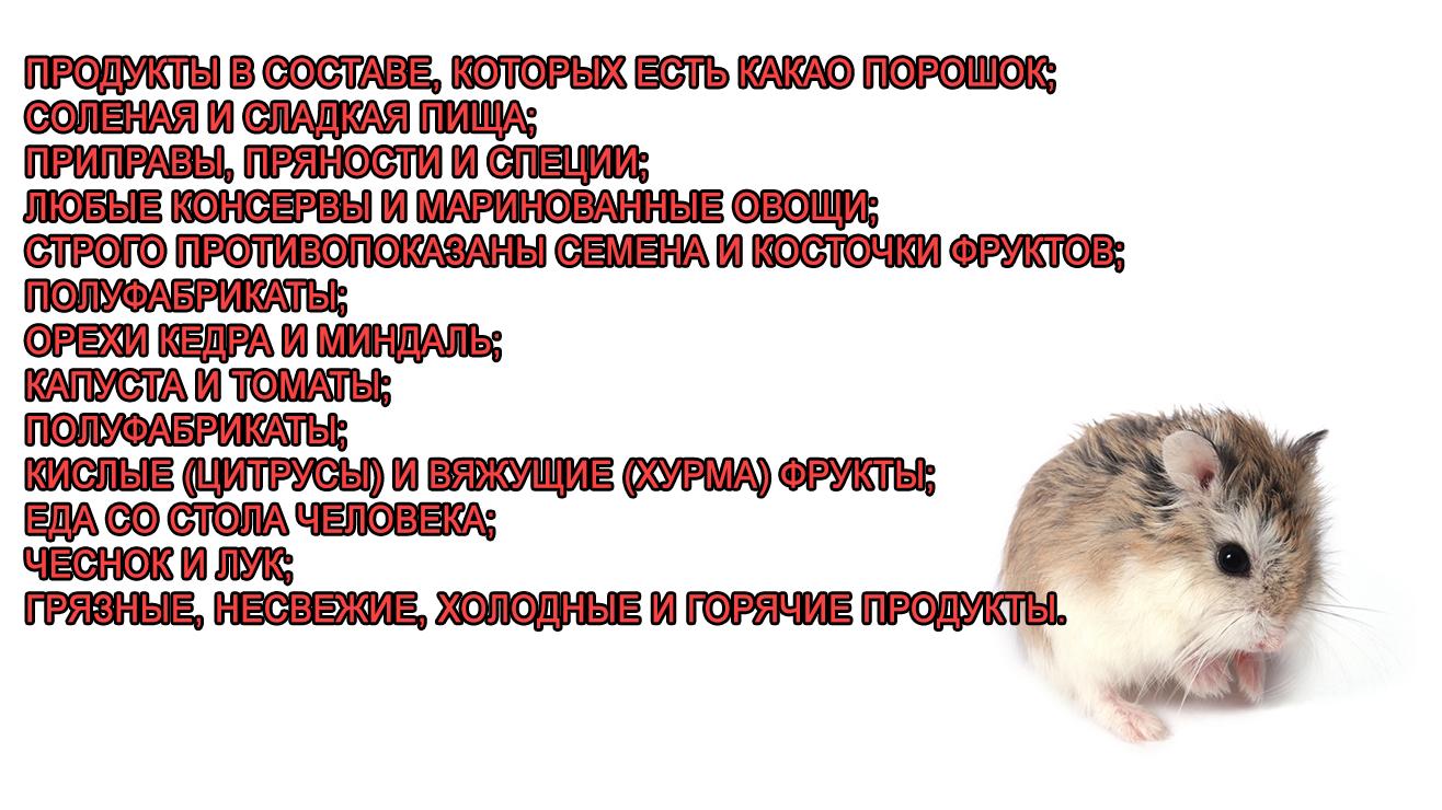 Чем не кормить роборовского